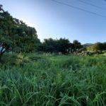耕作放棄された畑